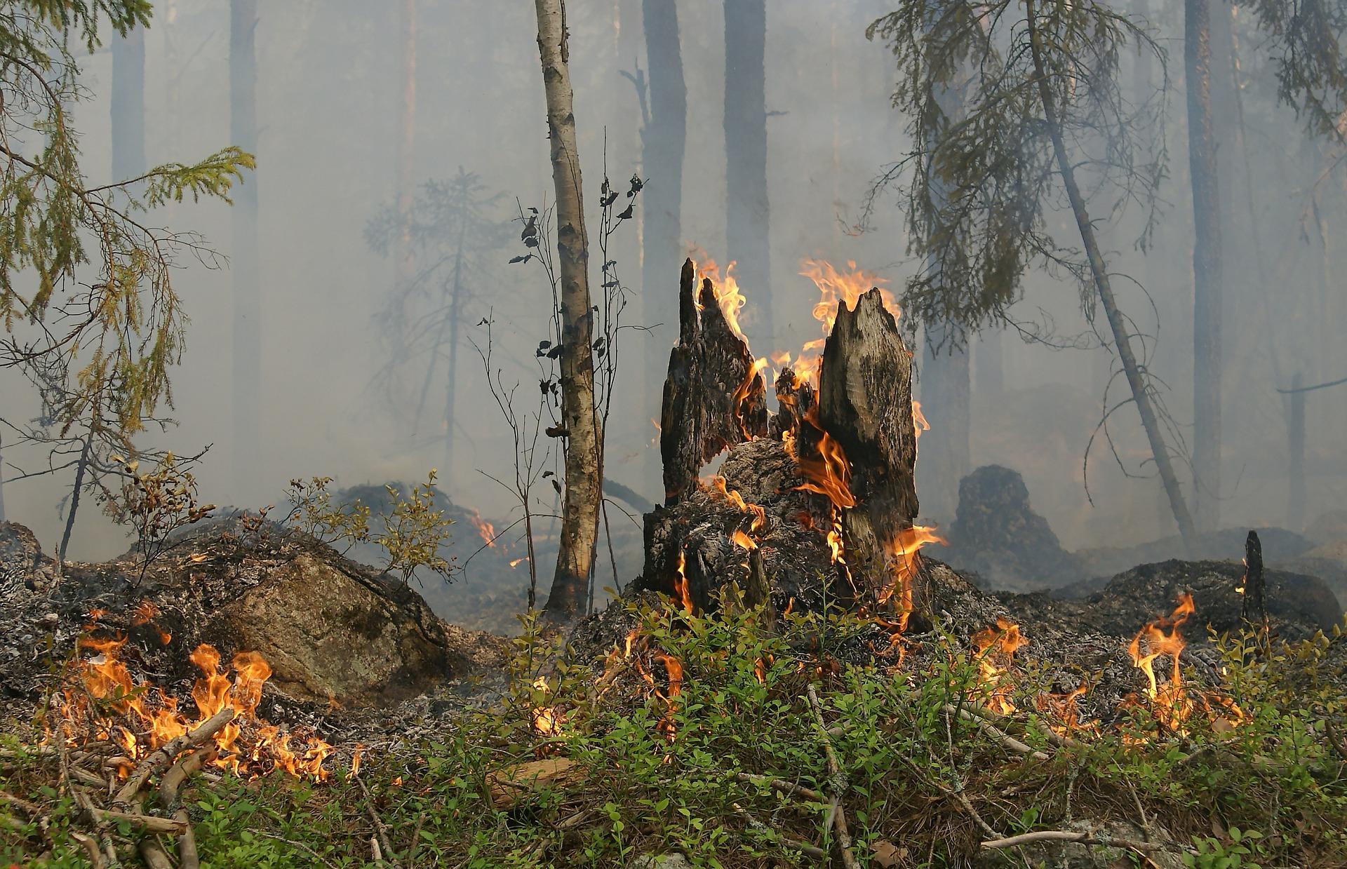 Indemnizações do Estado às vítimas dos incêndios não chegam à Serra da Gardunha