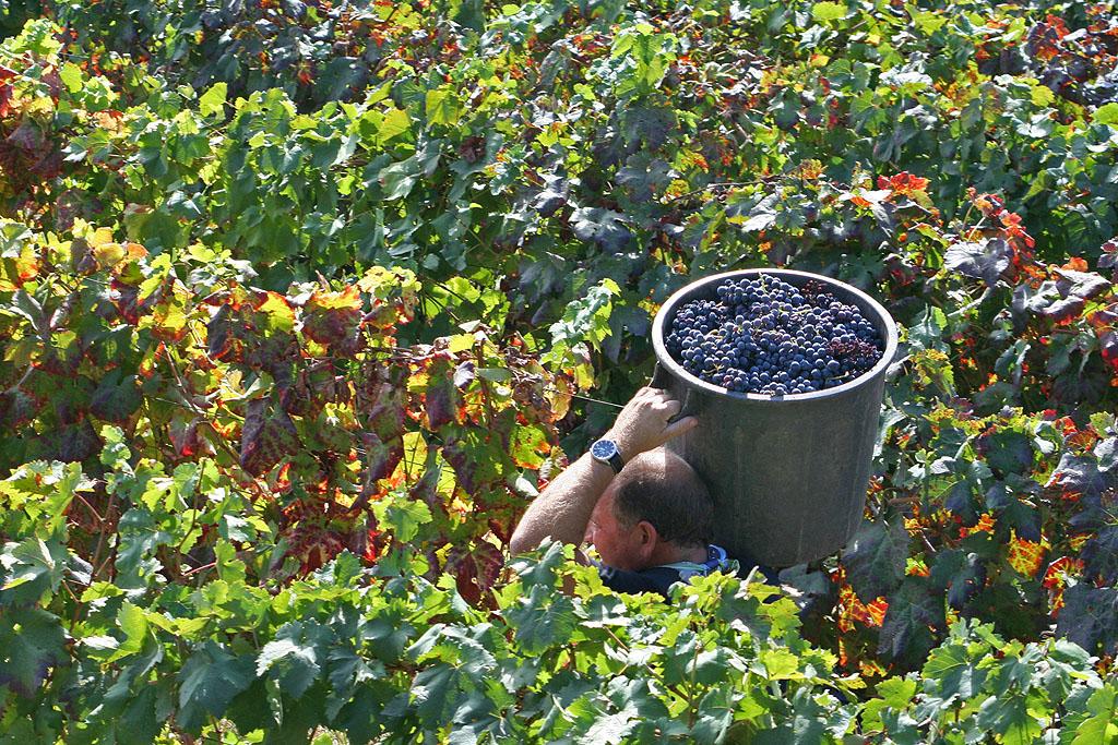 Representantes dos Viticultores Durienses apelam para a urgência de uma Casa do Douro pública