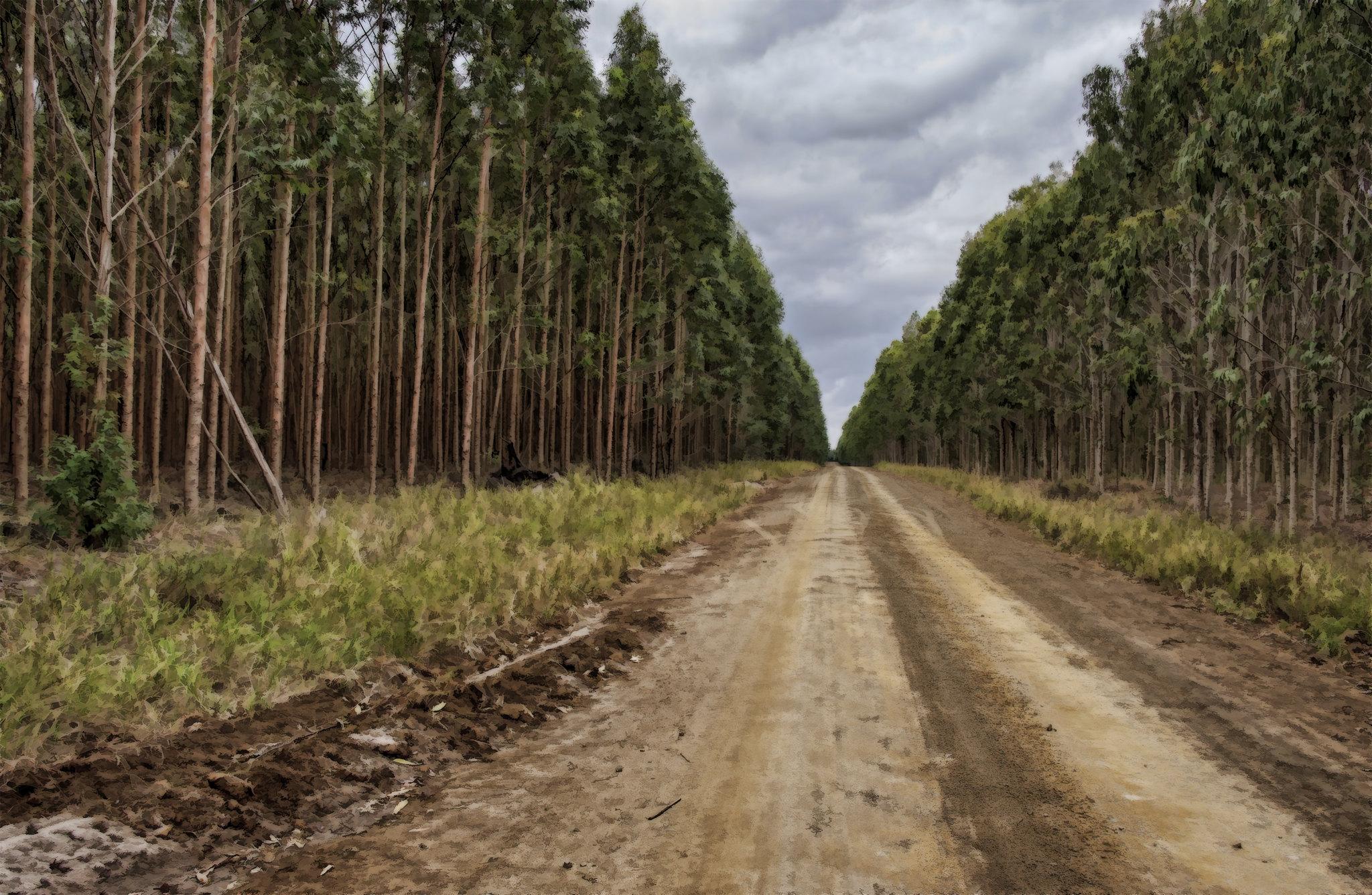 Viabilidade da Central de Biomassa do Fundão posta em causa por falta de matéria prima