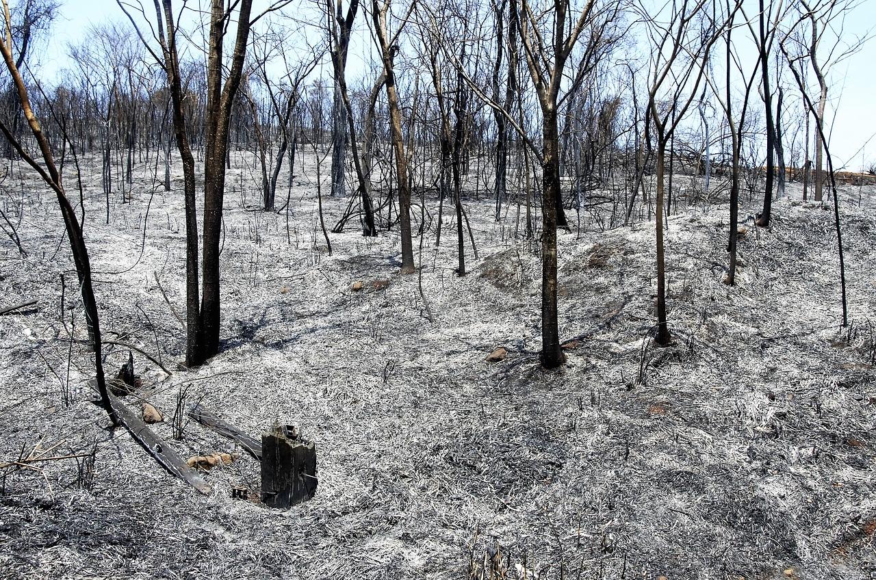 Risco de Incêndio no Interior, o constante período crítico
