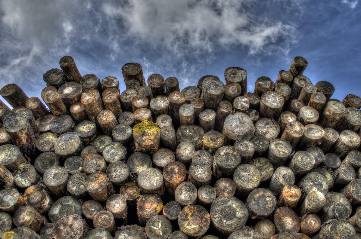 Para quando a necessária aposta no ordenamento florestal?