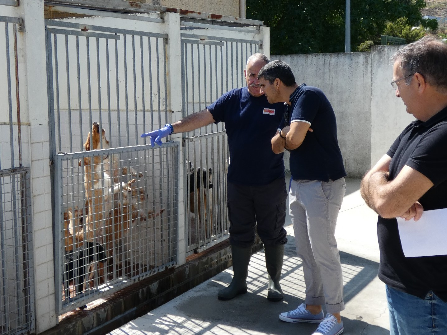 Lotação máxima impede que o Canil Intermunicipal da Terra Quente receba novos animais