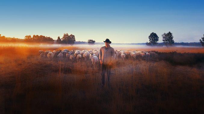 CineEco: A lama, as ovelhas, o nuclear e o cinema a caminho do Antropoceno