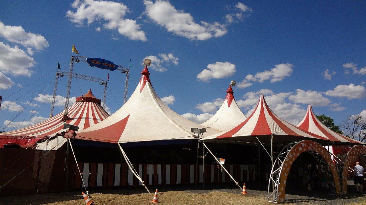 Bloco lança desafio pela proibição de circo com animais selvagens em Carregal do Sal
