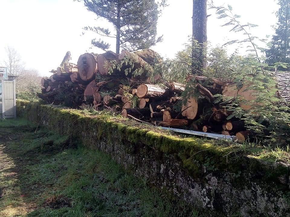 Abate de árvores em São Pedro do Sul gera contestação da população