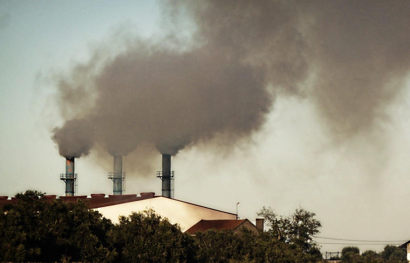 Trancoso: Fábrica de Processamento de Bagaço de Azeitona chega ao Parlamento