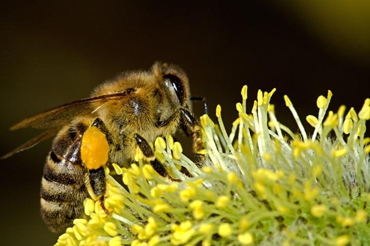 Abelhas, apicultura e nós….