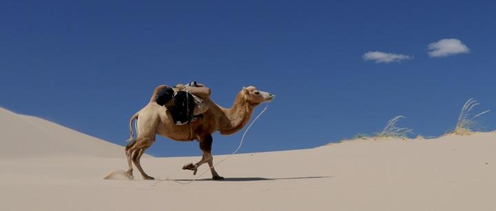 É mais difícil encontrar um autarca sábio do que um camelo passar no buraco duma agulha
