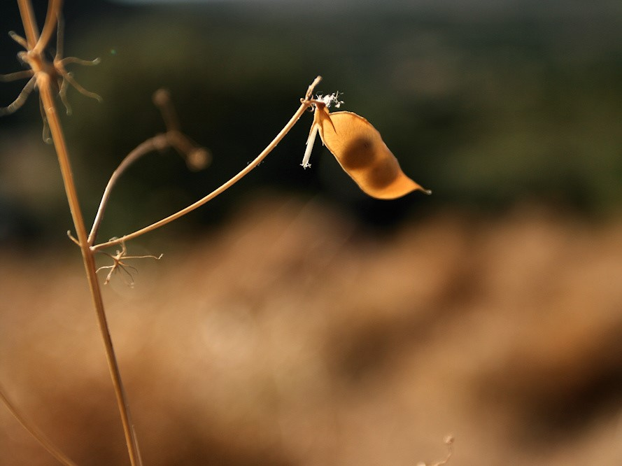 Garroba, a leguminosa nativa e resistente que fixa nitrogénio, aduba e alimenta a fauna silvestre