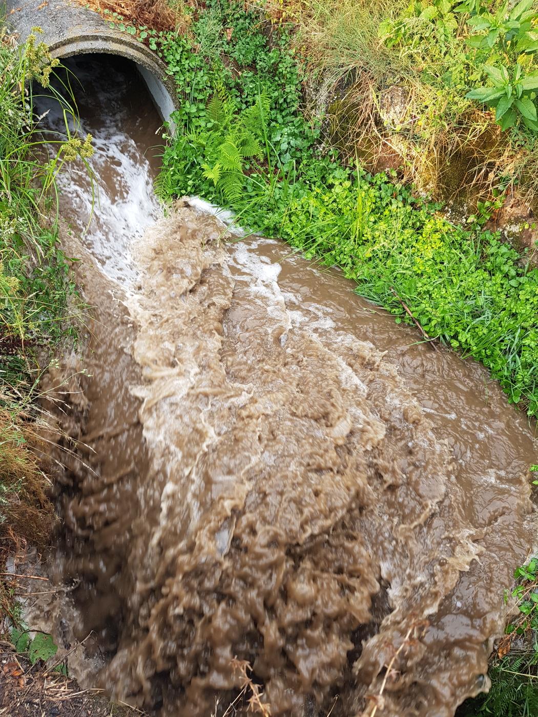 Comissão Europeia pondera intervir no caso de poluição do Rio Criz em Tondela