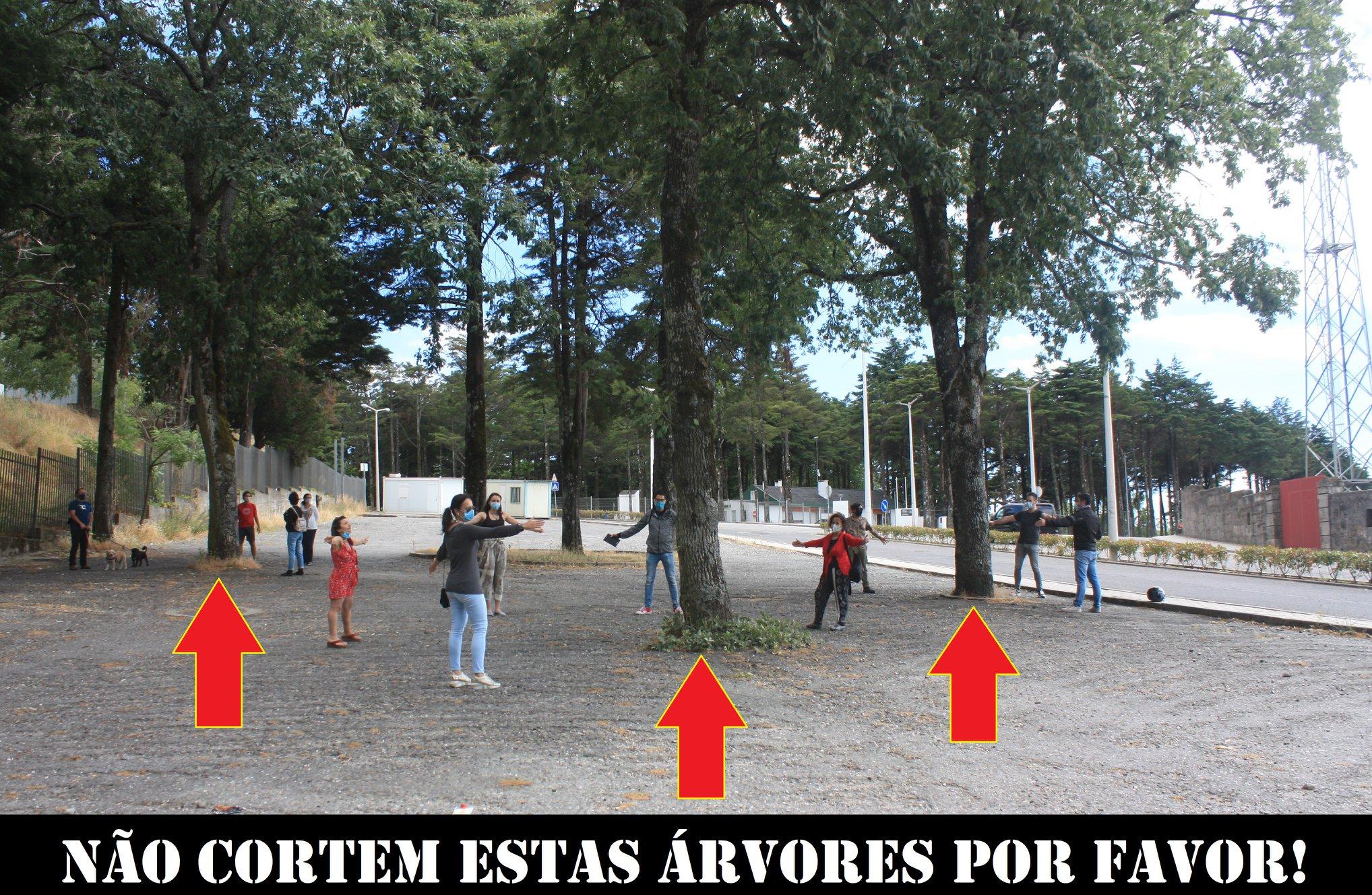 Protestos na Guarda contra abate de árvores