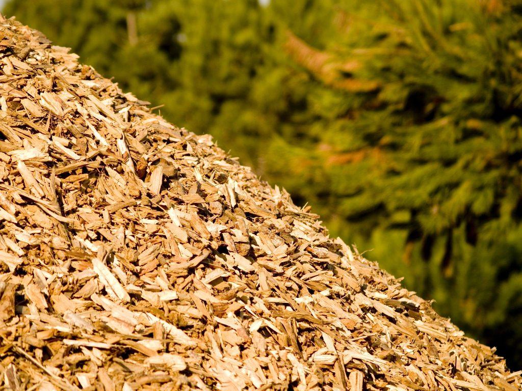 Biomassa florestal