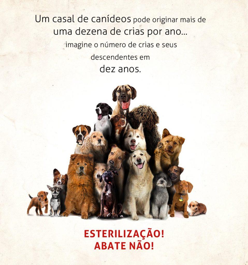 Campanha de Esterilização Animais Rua