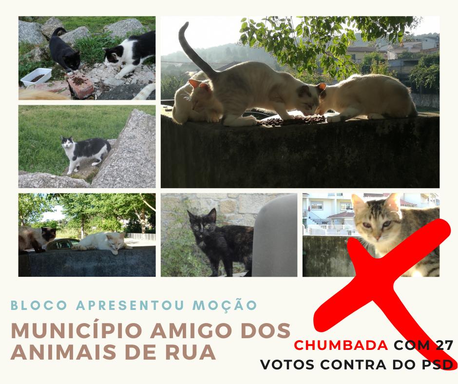 """Assembleia Municipal de Viseu: chumbada moção """"Por um Município Amigo dos Animais de Rua"""""""