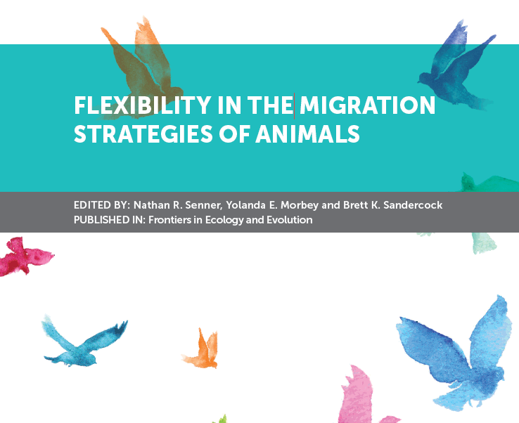 Livro 'Flexibility in the Migration Strategies of Animals' integra artigo científico no qual a Palombar colaborou