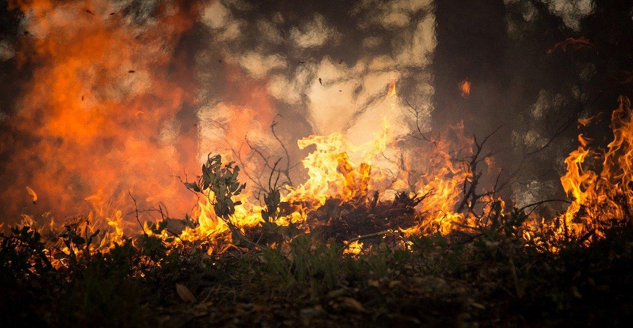 Bloco de Esquerda quer conhecer resultados da avaliação dos planos municipais contra incêndios