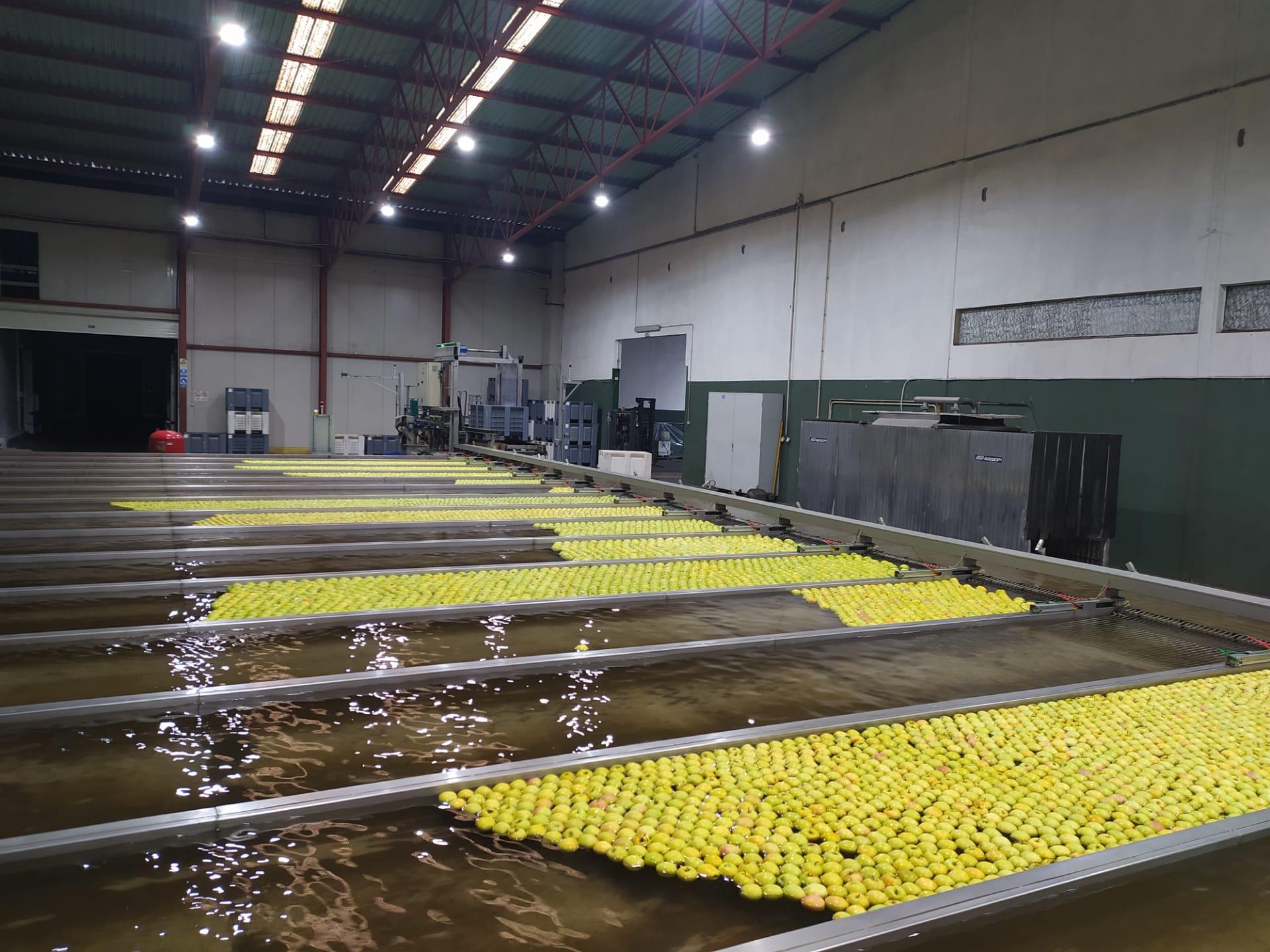 Apoios ainda não chegaram aos produtores de maçã de Moimenta da Beira e Armamar