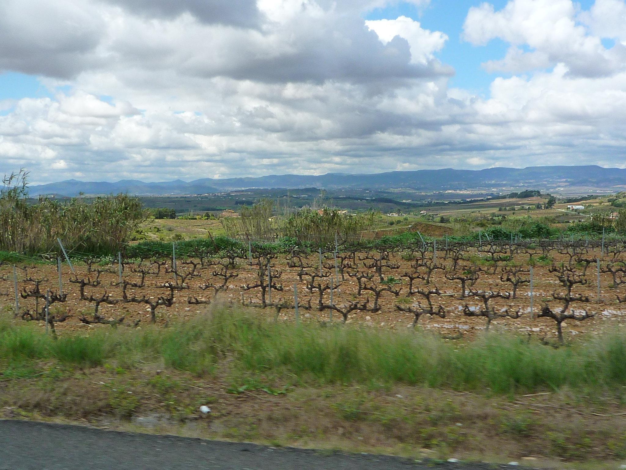 Propostas para adaptação da agricultura às alterações climáticas chumbadas na Assembleia da República