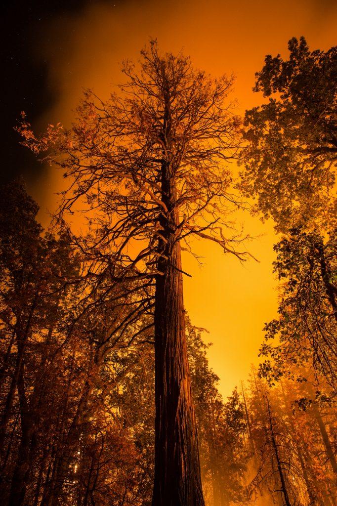 incêndio eucalipto