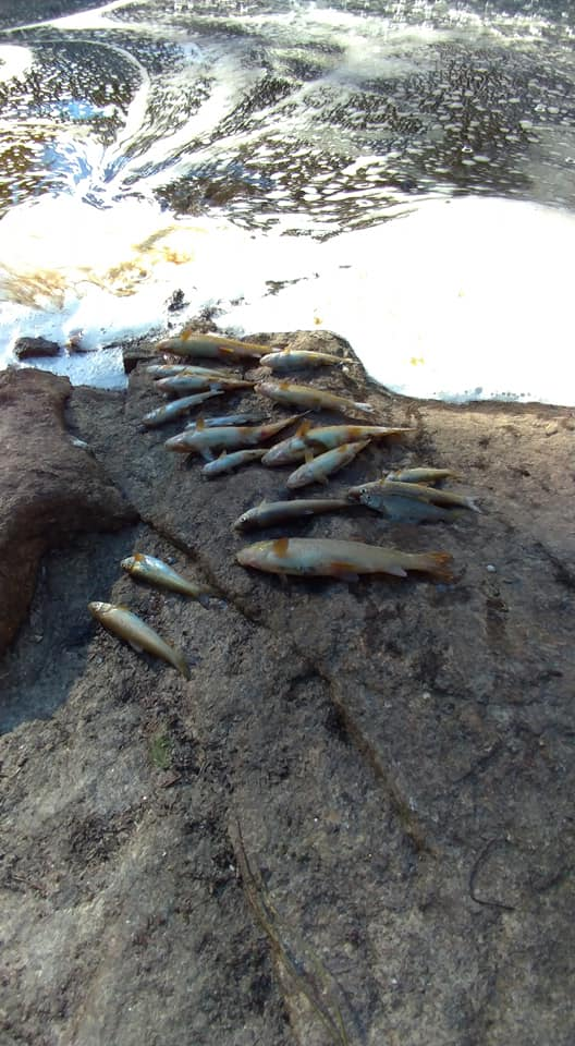 ETA na origem da descarga poluente na Barragem das Cainhas não cumpre a lei