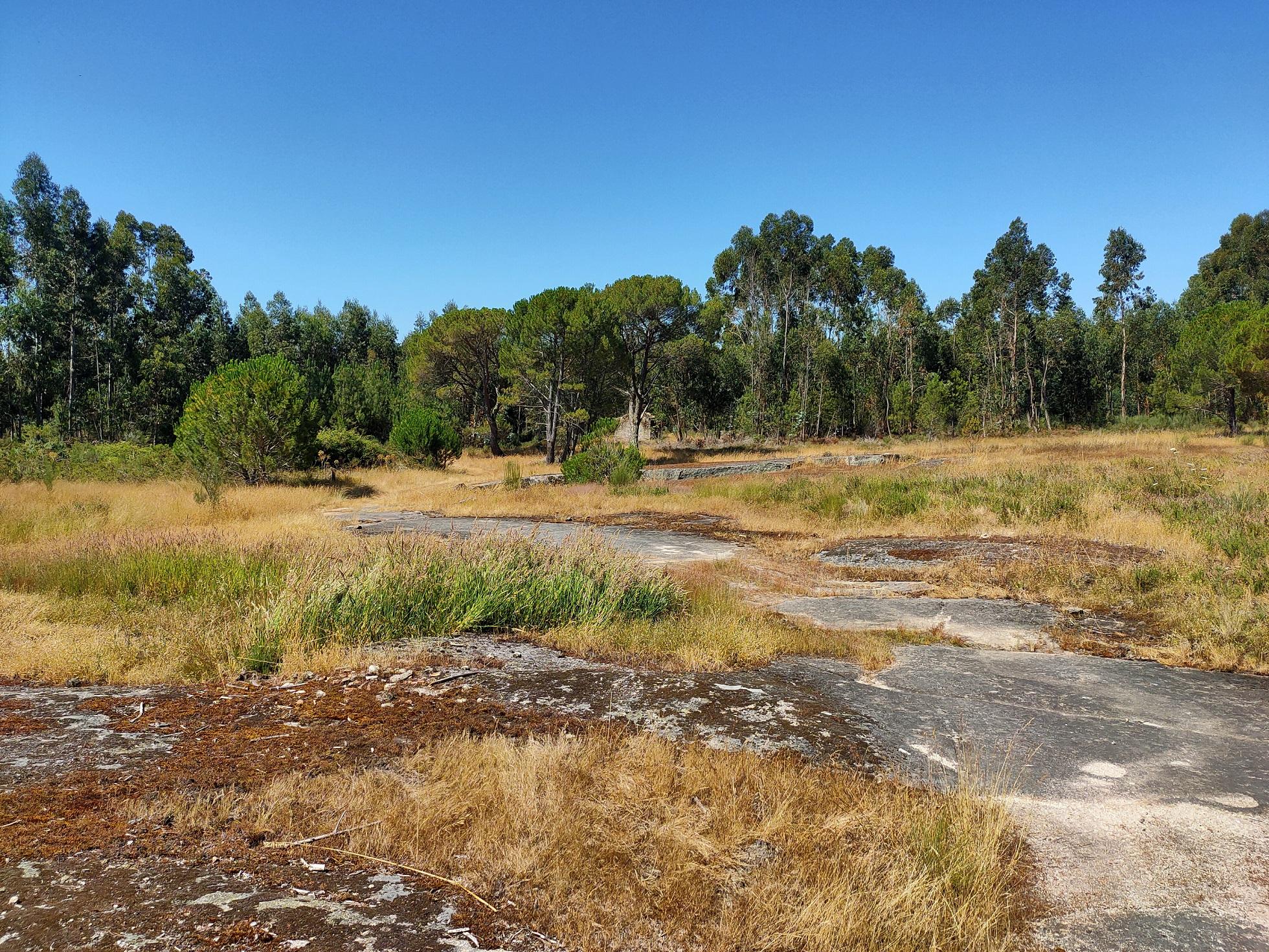 Área de floresta, pastagens e matos está a regredir em Portugal