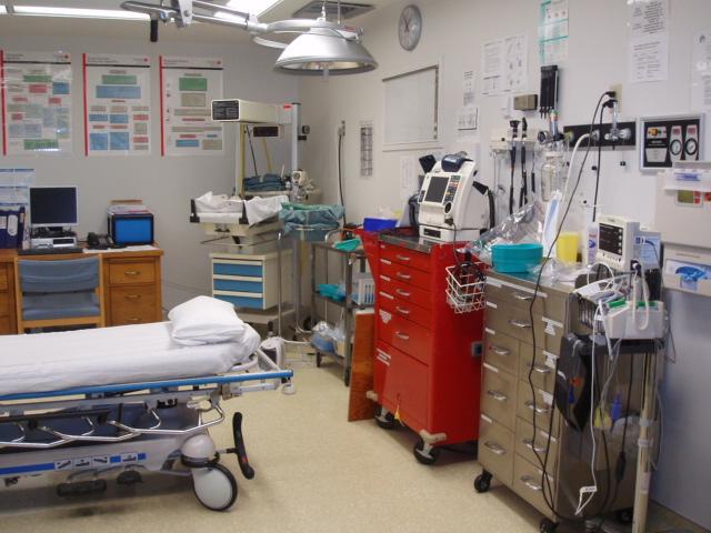 Na linha SNS24 há profissionais de saúde a trabalhar sem receber