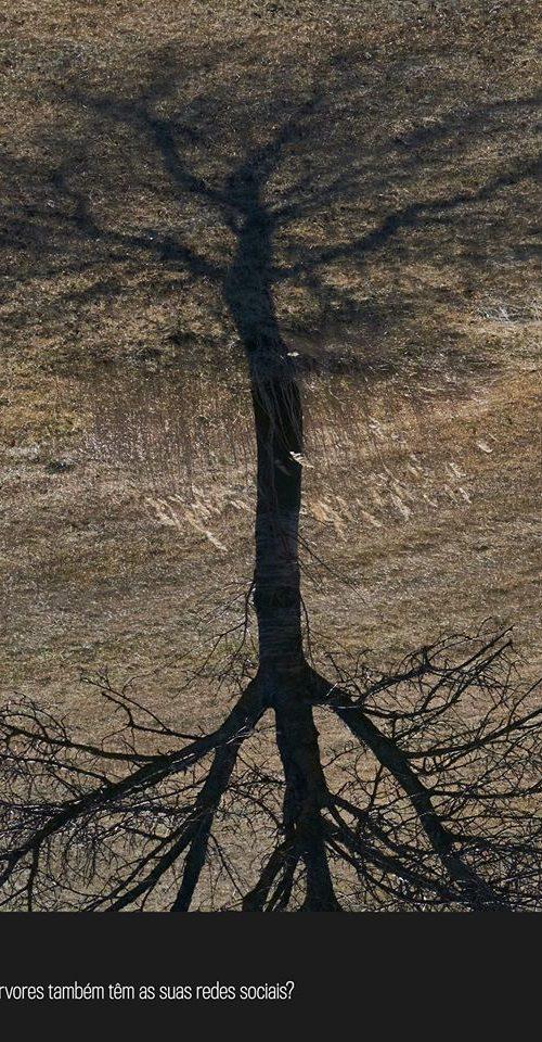 as árvores também têm as suas redes sociais