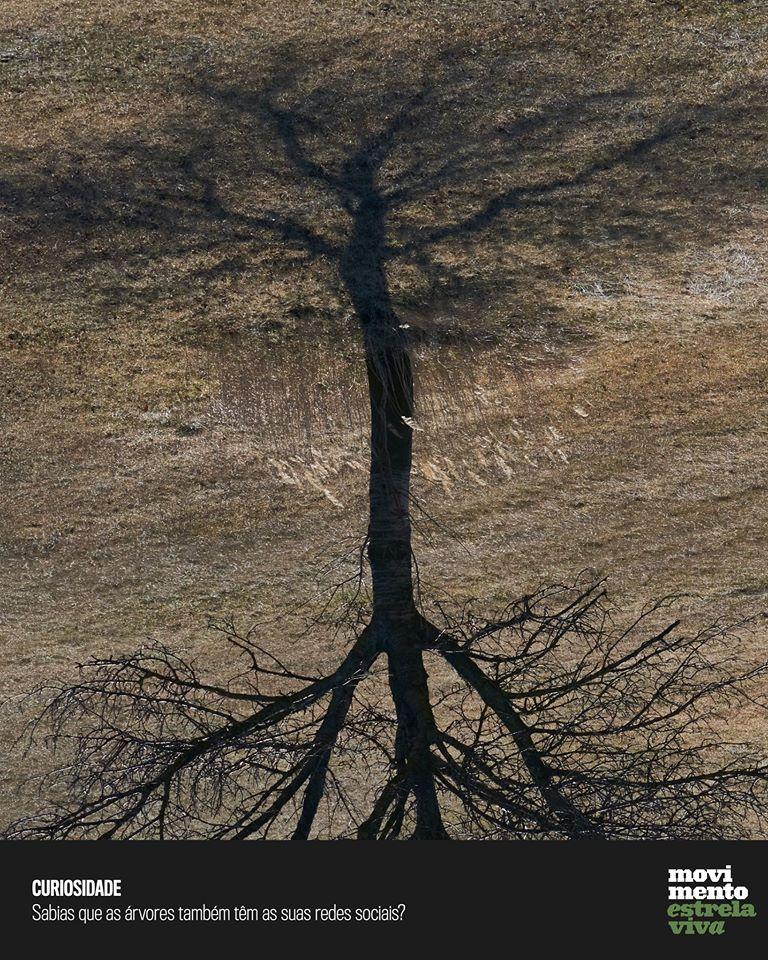 #8 Curiosidade: Sabias que as árvores também têm as suas redes sociais?