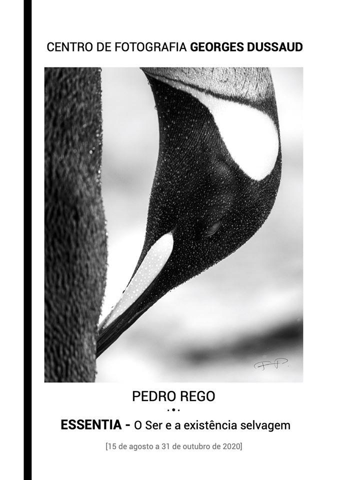 """Exposição-viagem fotográfica: """"ESSENTIA – O Ser e a existência selvagem"""" de Pedro Rego"""