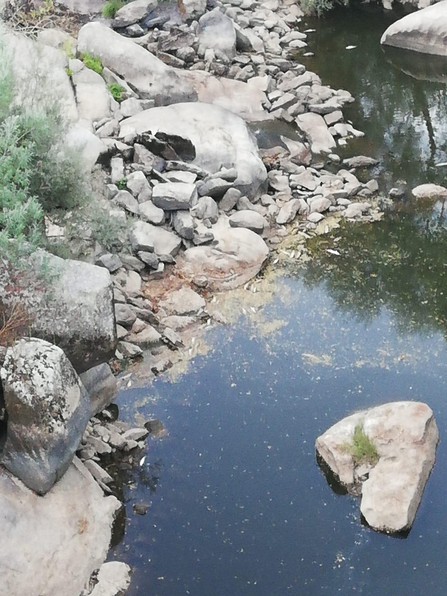 Carregal do sal: Peixes mortos encontrados no rio Mondego