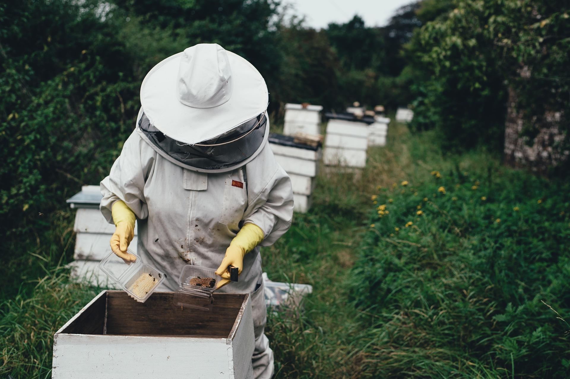 2020 pode ser o pior ano de sempre na produção de mel