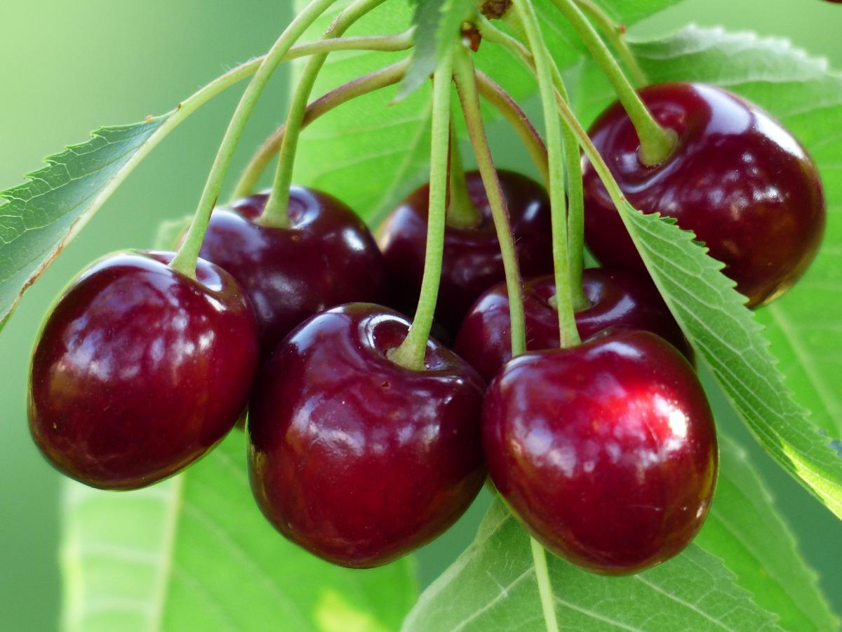 Fruticultores da Beira Interior com quebras na produção e nas vendas