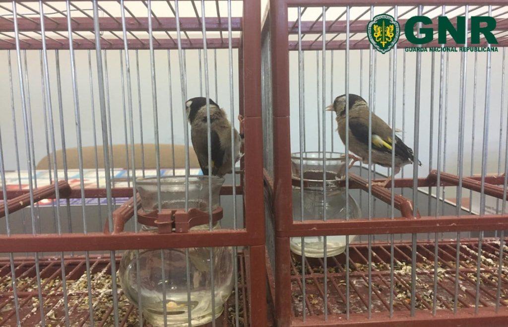 Aves apreendidas