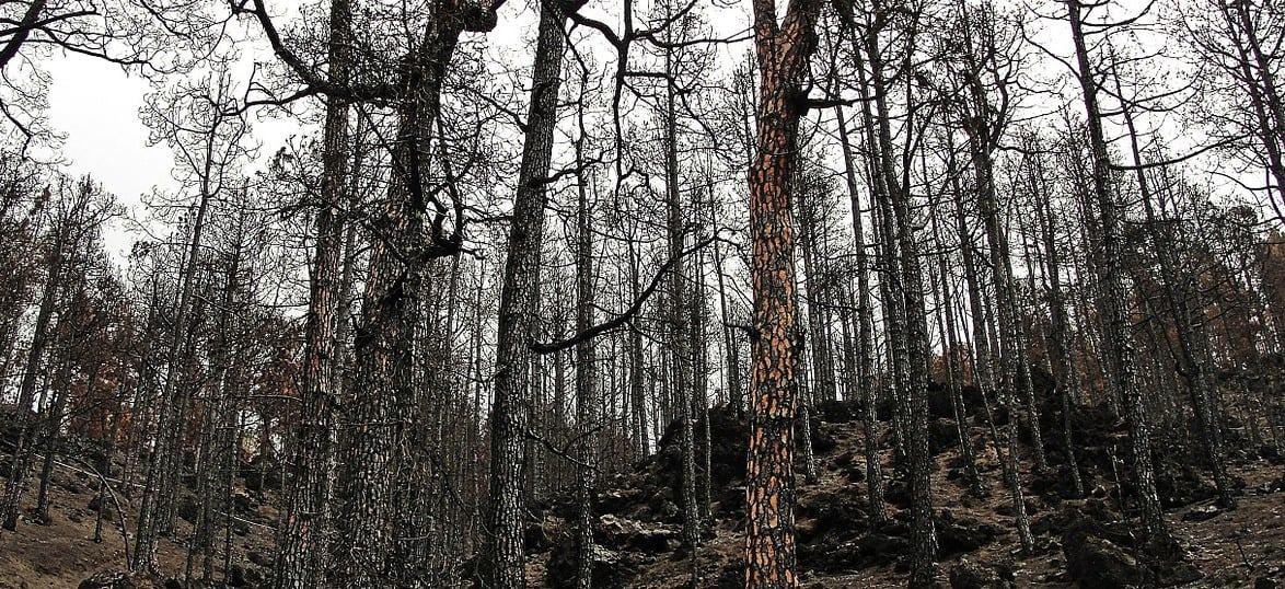 Em Proença-a-Nova arderam 15 mil hectares devido ao clima e à falta de gestão florestal