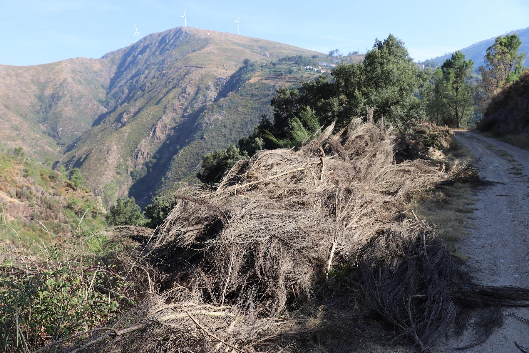 Depósito de material combustível em São Pedro do Sul preocupa população