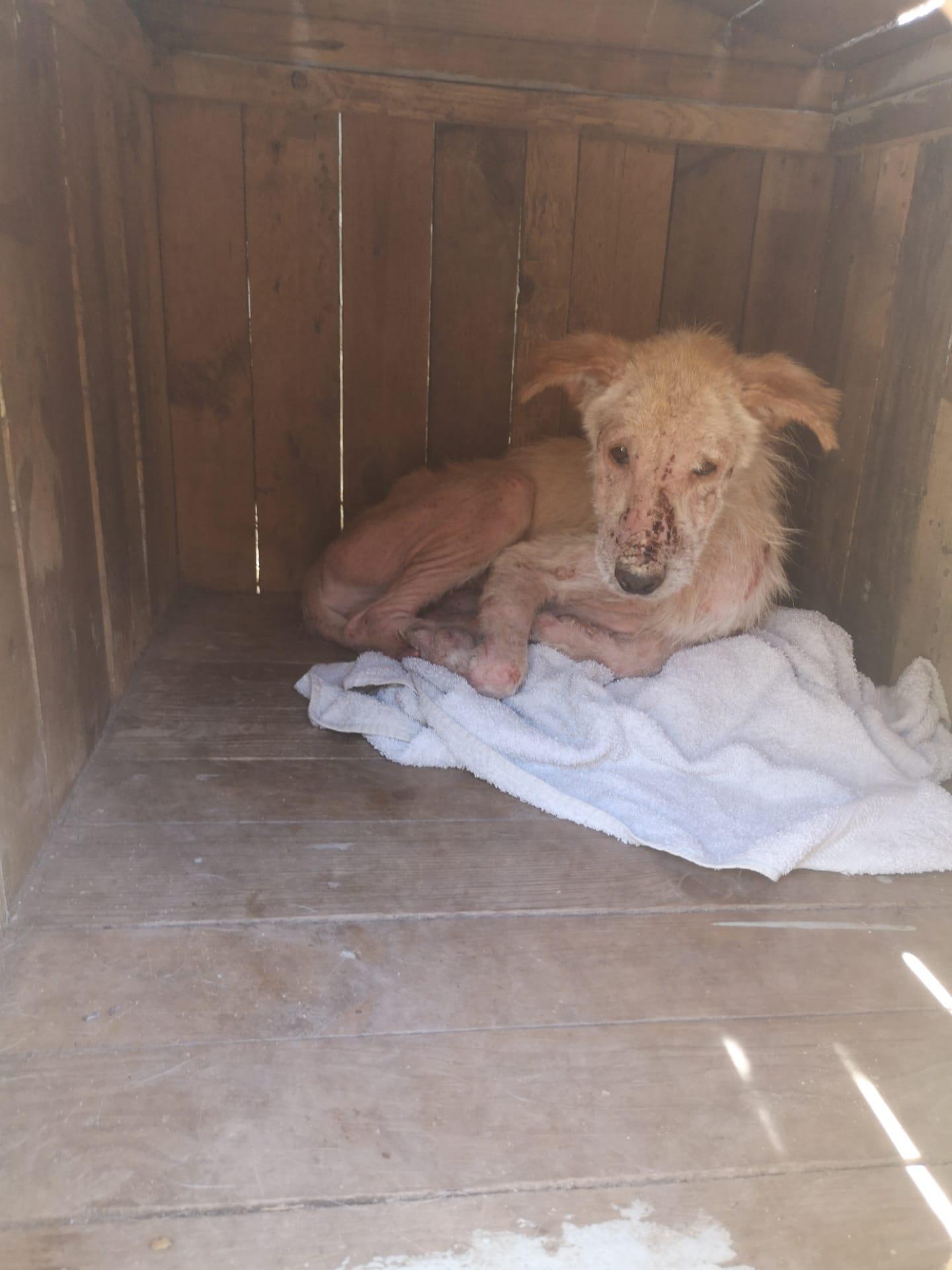 Cão um ano em estaleiros municipais de Santa Comba Dão sem cuidados veterinários