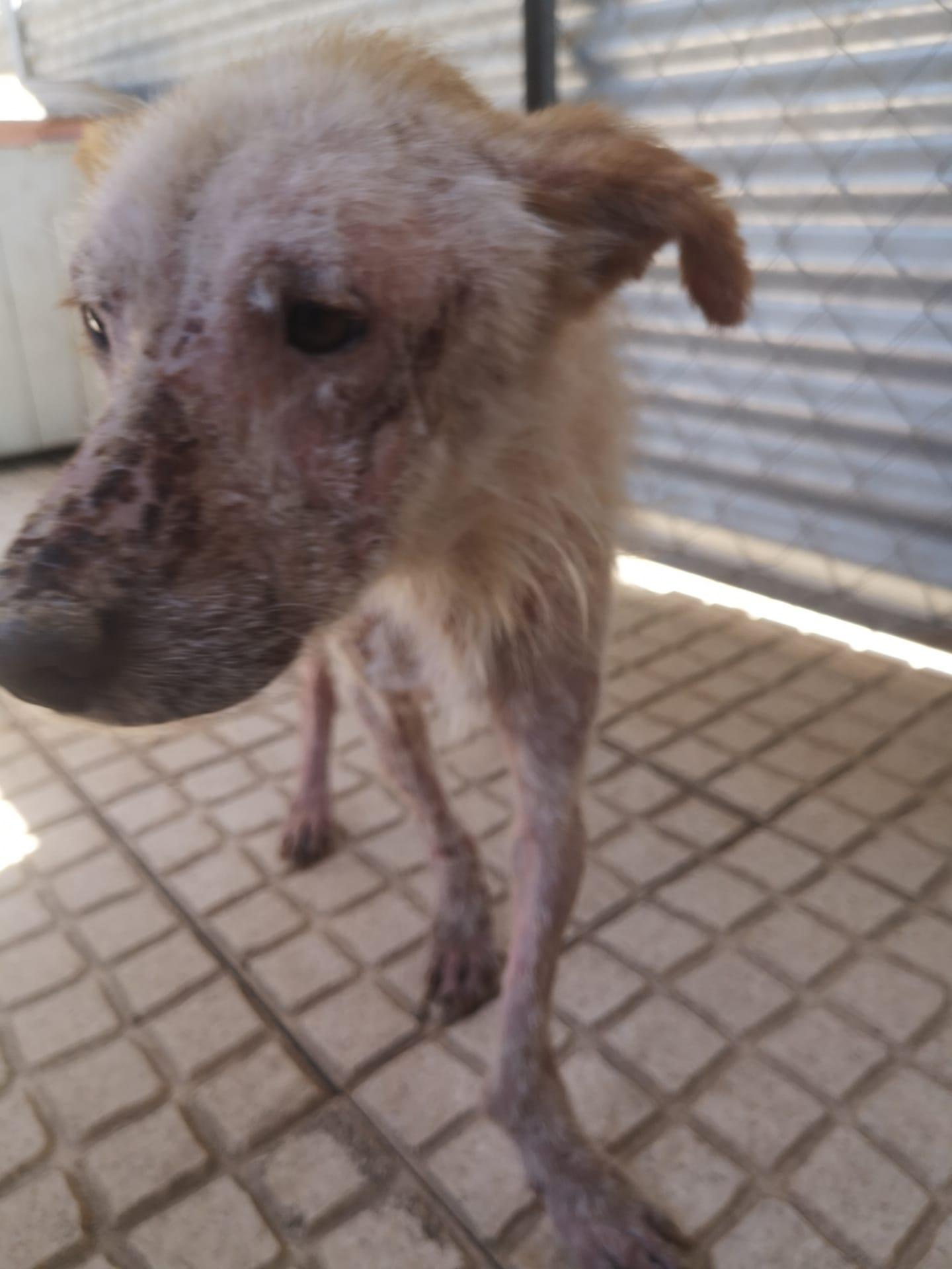 Após denúncia do Bloco Câmara de Santa Comba Dão abre inquérito ao caso do cão doente