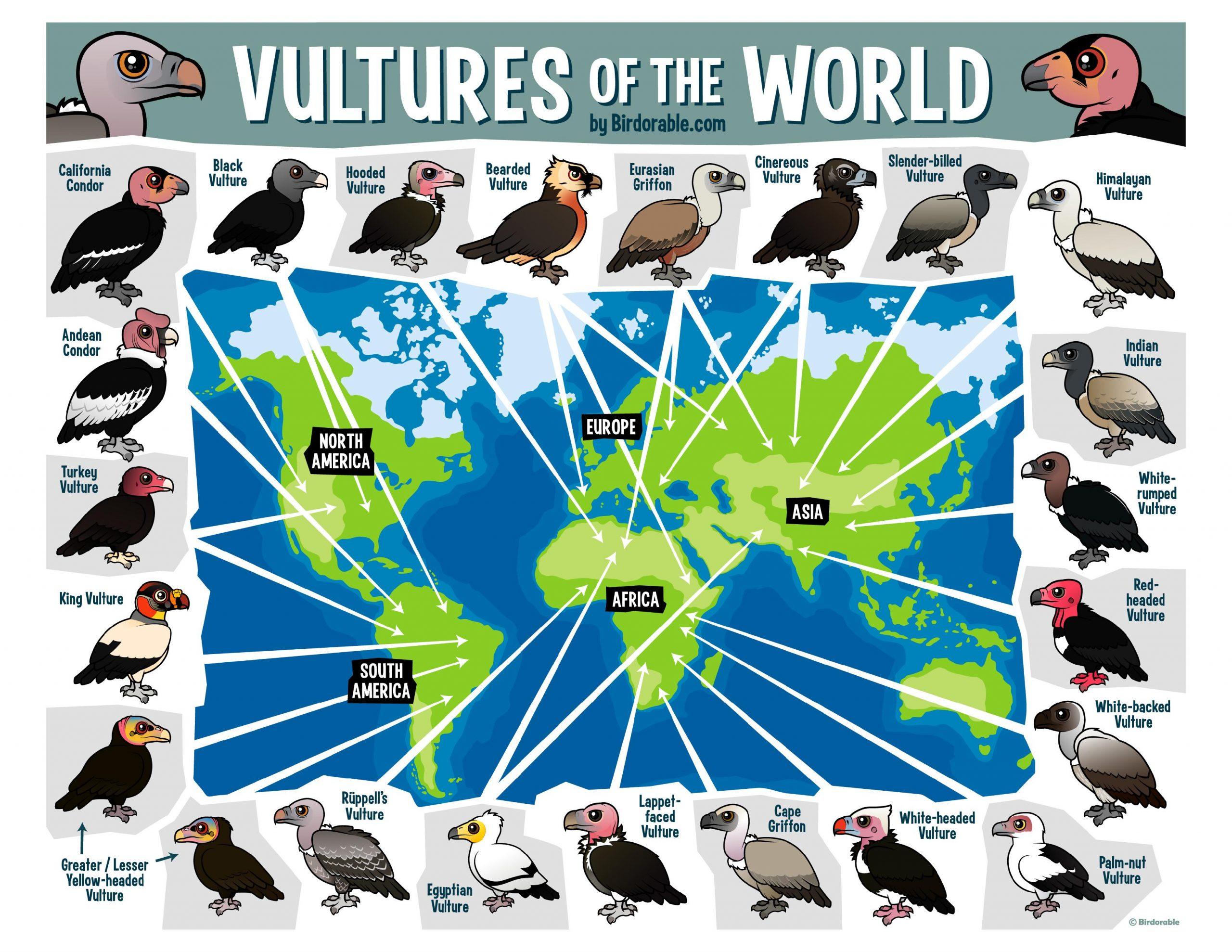 Dia Internacional dos Abutres celebrado este sábado para sensibilizar sobre a importância destas espécies e alertar para risco de extinção