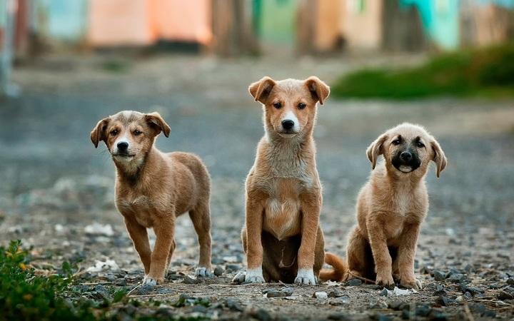 """Concelhos sem veterinário municipal e """"canil"""" em Castelo Branco, Guarda, Vila Real e Viseu"""