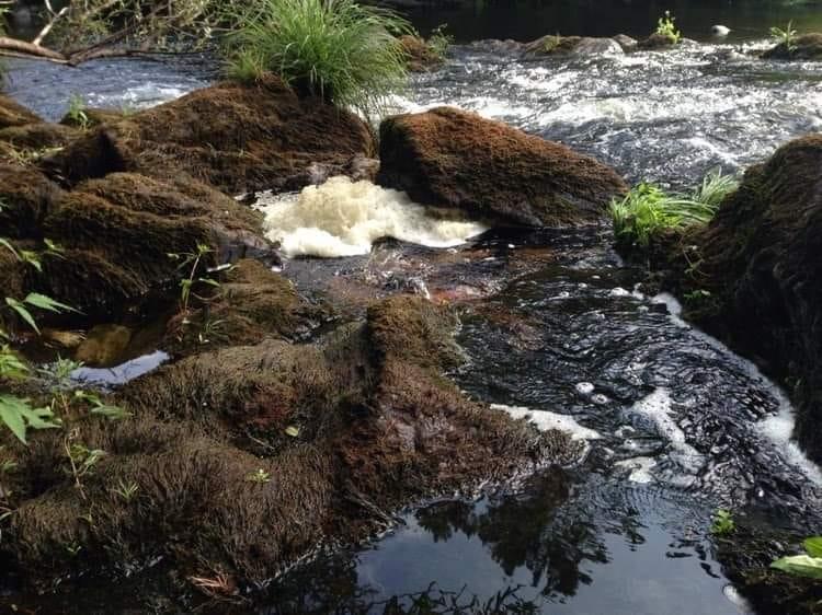 Poluição do rio Paiva continua e governo já foi questionado duas vezes num mês