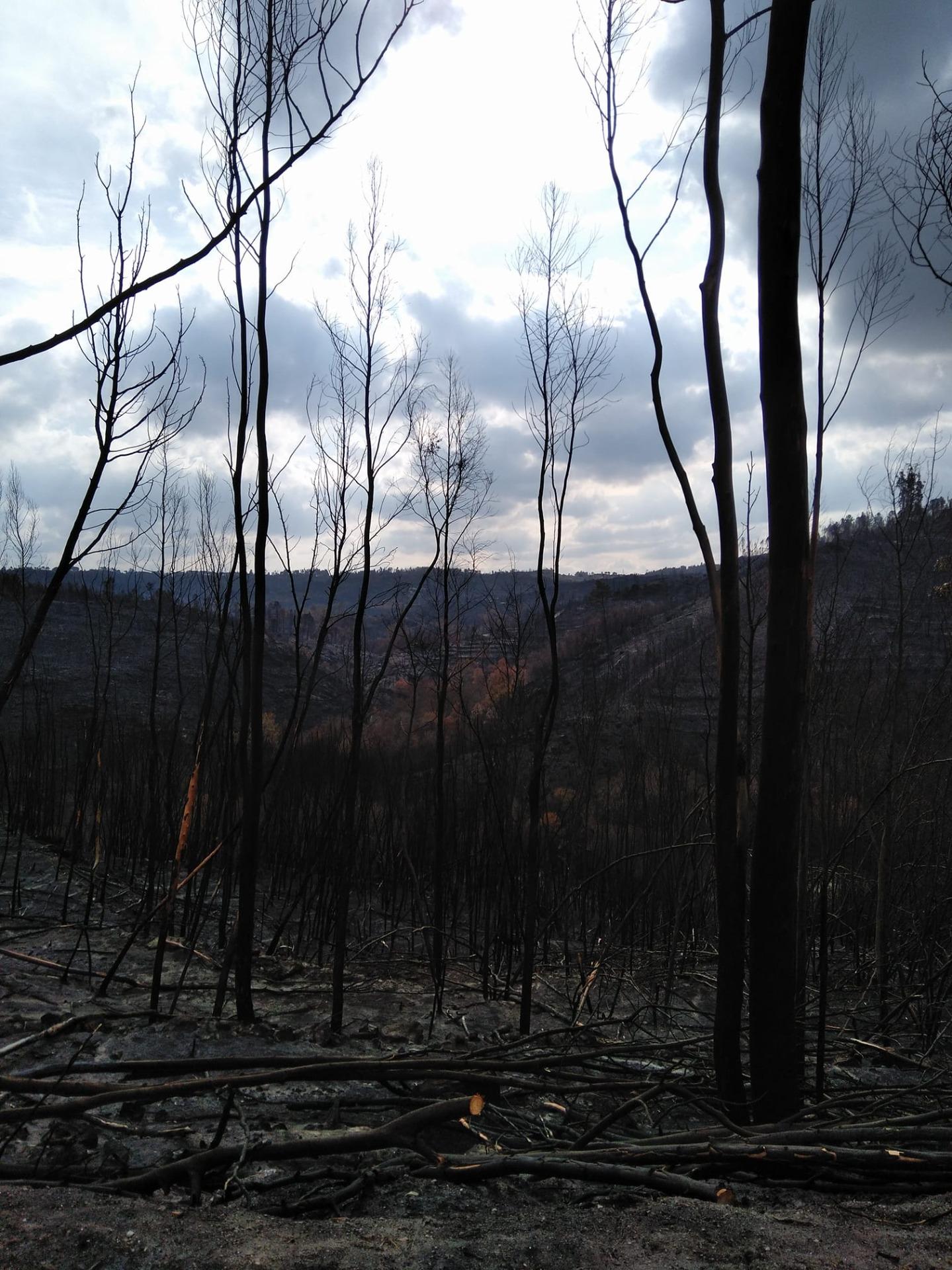 15 de outubro de 2017: o dia em que a região centro ardeu