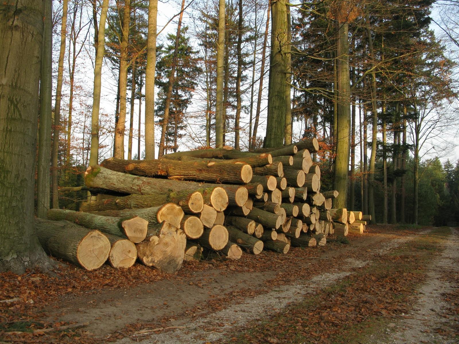 Zero pede suspensão de novas centrais de biomassa