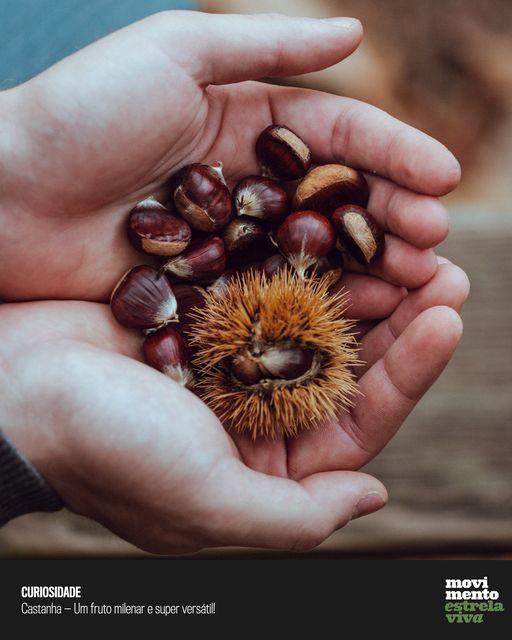 Curiosidade #15 – Quentes e boas! Castanhas: as batatas d'outrora!