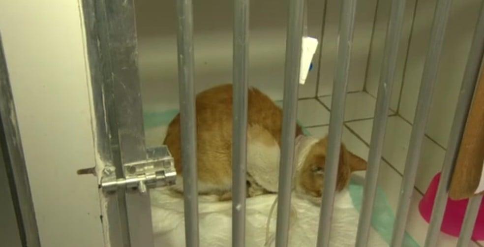 """Câmara de Idanha-a-Nova captura gatos de rua e envia-os para """"morrerem"""" em Proença-a-Nova"""