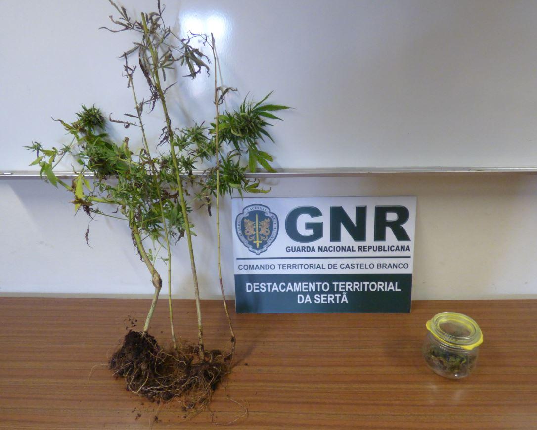 Mini apreensão de cannabis gera revolta em Castelo Branco