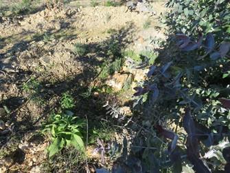 Sítio Arqueológico destruído devido a plantação de eucaliptos em Vila Velha de Ródão