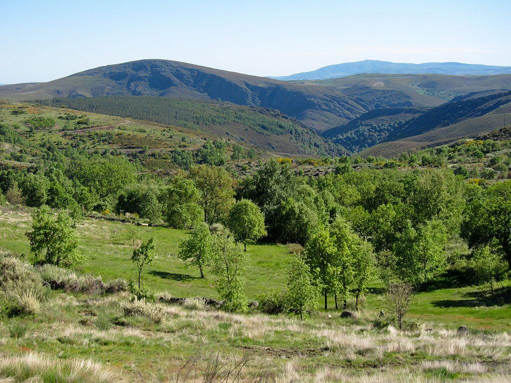 Seis projetos de investigação vão desenvolver novos conhecimentos sobre Parque de Montesinho