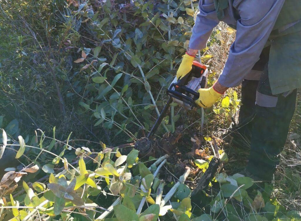 eucalipto palombar