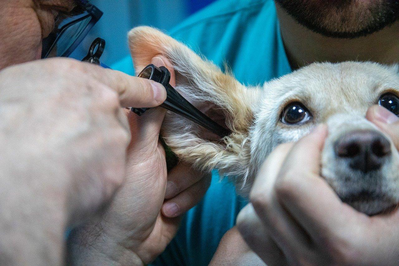 Projeto com uma docente da UTAD vai promover formação em medicina veterinária baseada na evidência