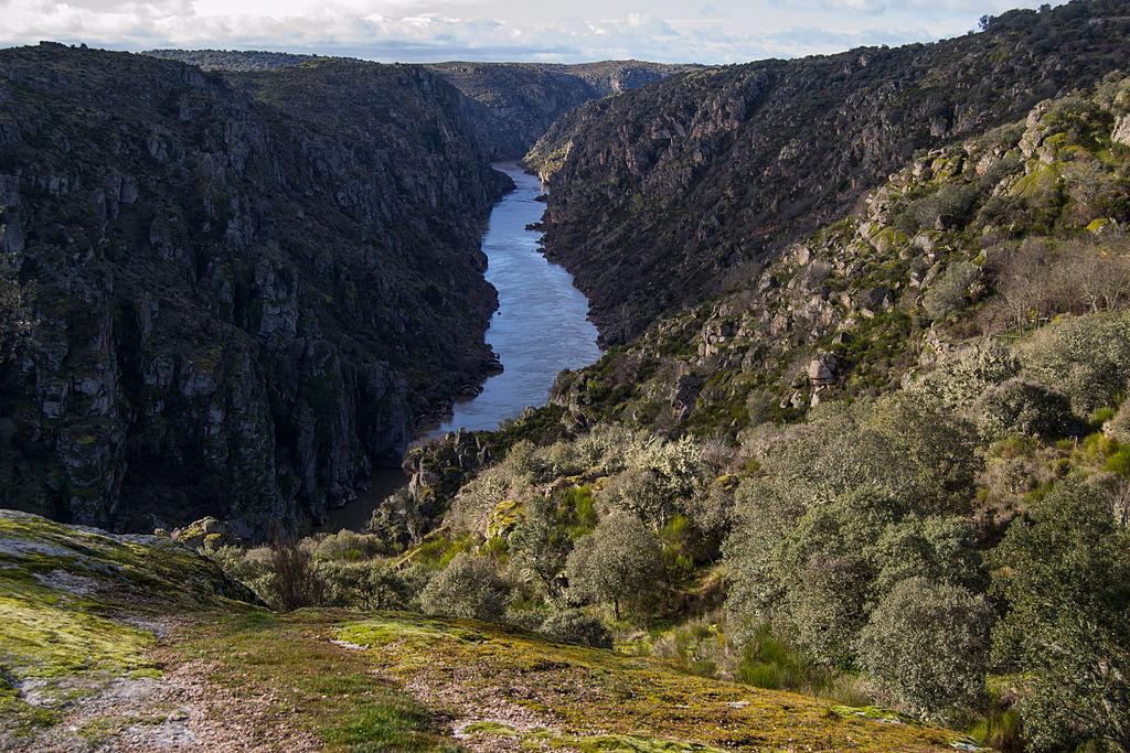 ICNF implementa projeto de proteção de espécies e habitats no Douro Internacional